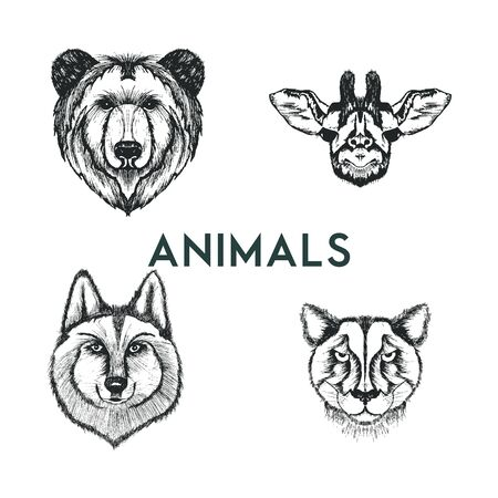 Sketched Drawn Wild Animals Muzzles Vector Set. Hand Drawn Creature Snouts Illustration