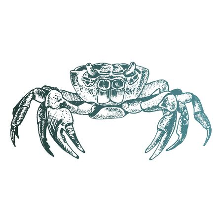 Crab with Strong Claws Vector Sketch Drawing. Marine Life Concept