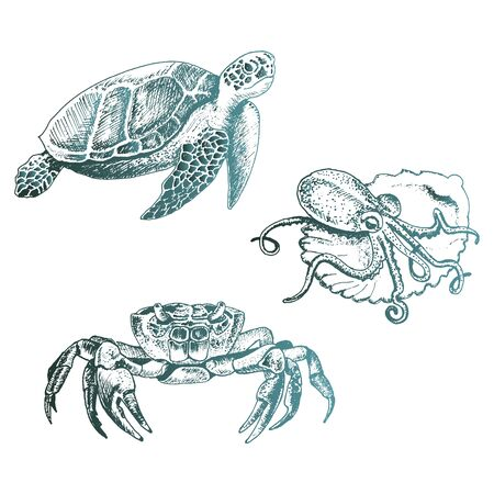 Ocean Life and Marine Creatures with Loggerhead Turtle and Octopus Vector Set. Decorative Aquatic Sketched Collection