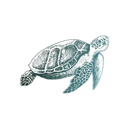 Loggerhead Turtle with Strong Armor Swimming Deep Underwater Vector Sketched Illustration. Hand Drawn Marine Creature Concept
