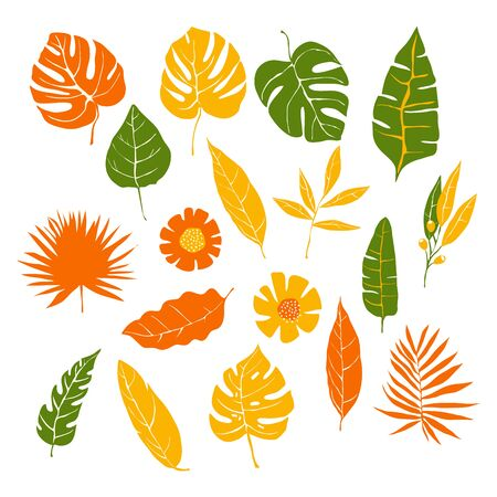Tropical Leaves and Plants Isolated on White Background Vector Set. Floral Decorative Elements for Borders and Greeting Card Design
