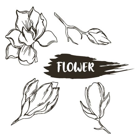 Magnolia with Bowl-shaped Fragrant Flower Isolated on White Background Vector Set. Flower Bud with Showy Petals on Stem Floral Hand Drawn Illustration