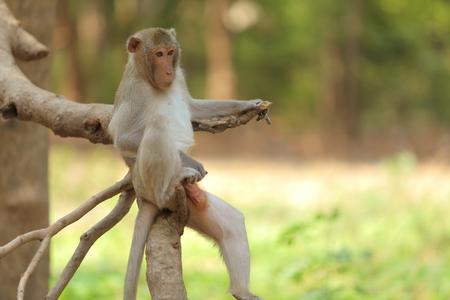 food fight: monkey