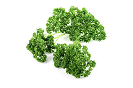 Fresh chervil / parsley on white background Stock Photo