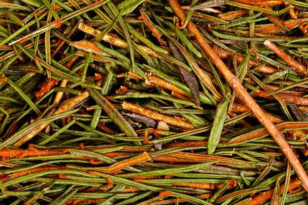 palustre: Marsh (Northern) Labrador Tea (Ledum palustre). Stock Photo