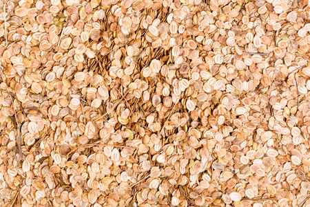 parsnip: Texture from Parsnip seeds.