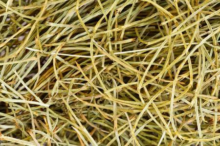 Field Horsetail - close-up photo. photo