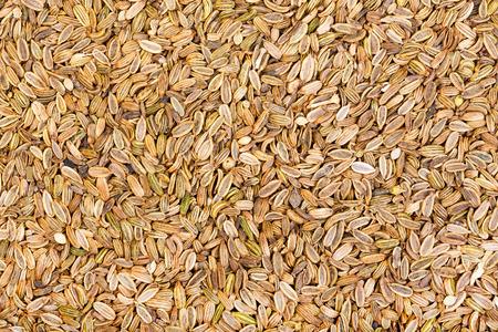 finocchio: Priorità bassa secca semi di finocchio. Archivio Fotografico