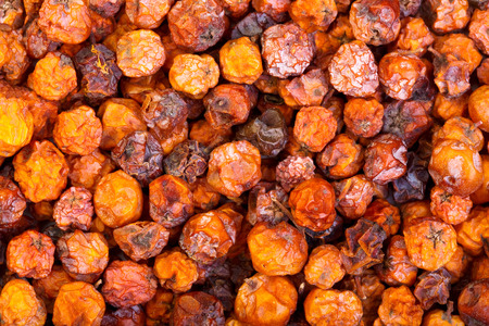 ash berry: Dry rowan for medical use. Stock Photo
