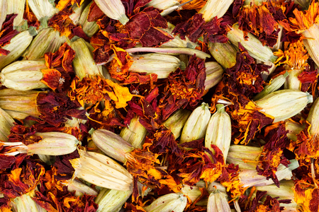 tagetes: Marigold flowers are drying for herbal medicine use (tagetes).