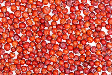 enebro: Seco de semillas de Juniper.