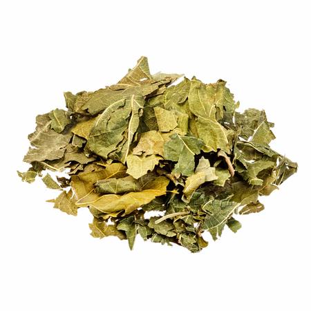 hojas secas: Hojas secas de morera para uso médico. Aislado en blanco.