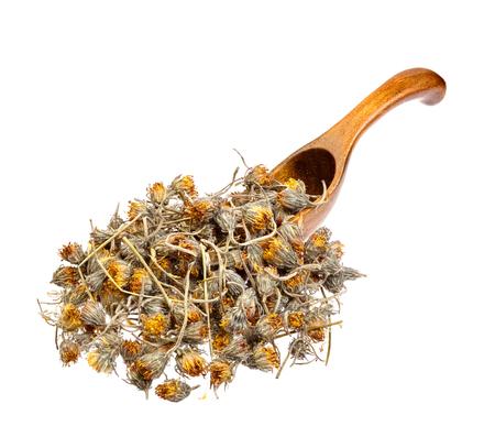 hawkweed: Dried Hawkweed flowers on the wooden spoon. Stock Photo