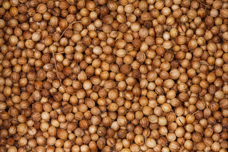 coriander seeds: Coriander seeds. Stock Photo