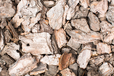 res: Pine bark. Background. Texture. Hi res photo.