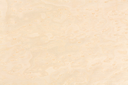 Bright natural maple wood design texture. Natural background closeup. Extremely high resolution photo. Stock Photo