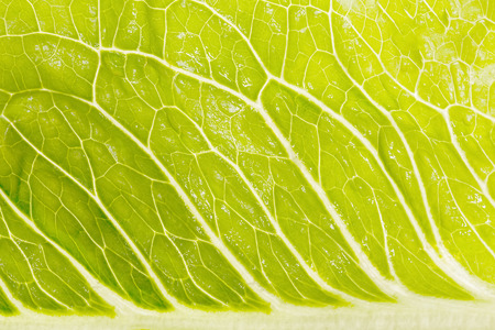 Amazing light green salad in enlarged size. High resolution photo.