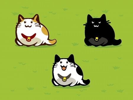 Chat of three cats