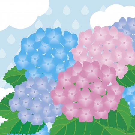Hortensja w deszczu Ilustracja