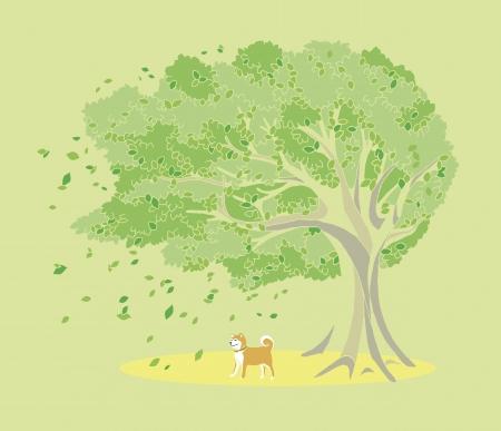summer dog: Trees and dog