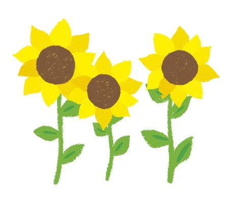 Illustration of sunflower was drawn with a crayon