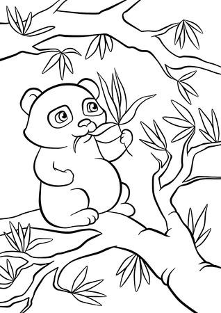 animales del bosque: pequeños asientos panda en el árbol y come hojas
