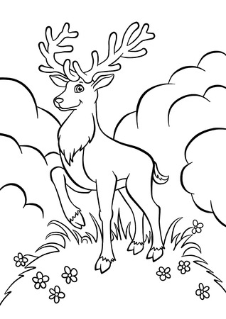 one young deer in the forest coloring photo