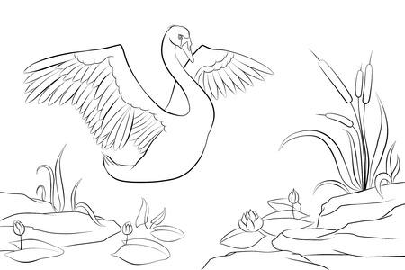 swan on the pond. sunset