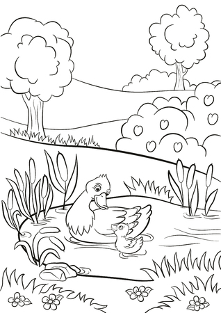 Coloring pages. Kind duck and little cute duckling swim on the pond. There are trees, bushes, flowers and reeds around. Summer.