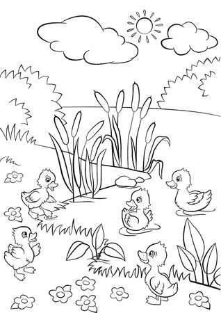 ducklings: Coloring pages. Five little cute ducklings swim on the lake and stand on the grass. There are bushes, flowers and reeds around. Summer.