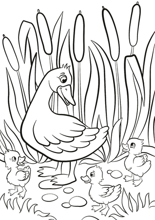 lake shore: Coloring pages. Kind duck and free little cute ducklings walk on the lake shore. They are happy and smile. There are grass and reeds around. Summer.