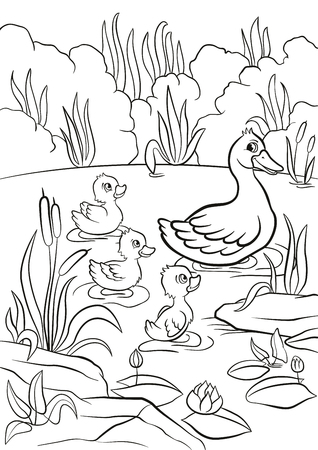 Coloring pages. Kind duck and free little cute ducklings swim on the lake. They are happy and smile. There are bushes, grass, stones, water lilies and reeds around. Summer.