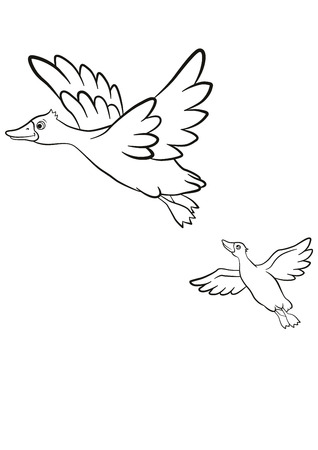 lake shore: Coloring pages. Two ducks fly under the lake. Lake in in the forest. They are smiling and happy.