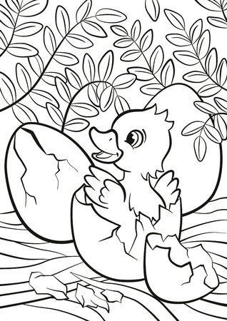 Coloring pages. Little cute duckling hatched from the egg. It`s smiling and happy.