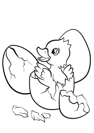 incubation: Coloring pages. Little cute duckling hatched from the egg. It`s smiling and happy.