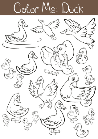 incubation: Coloring pages. The set of ducks and ducklings. They are fly, stand, swim and smile. Illustration