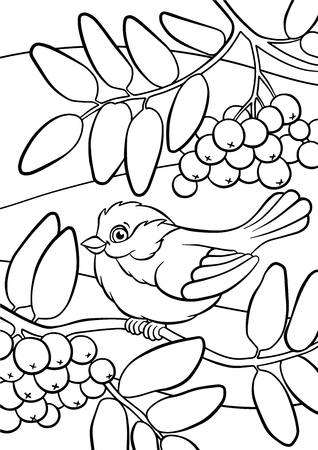 mountain ash: Coloring pages. Birds. Little cute titmouse sits on the mountain ash.