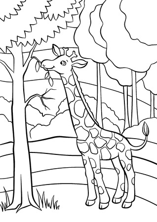 Coloring pages. Animals. Little cute giraffe eats leaves in the forest.
