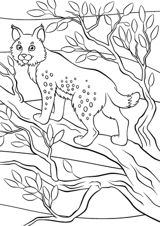 coloring pages: Coloring pages. Animals. Little cute lynx stands and smiles. Illustration