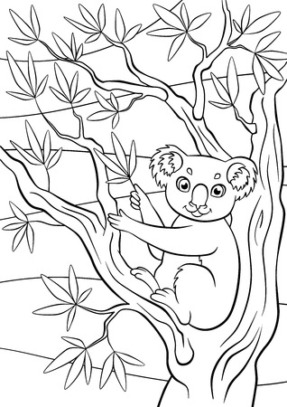 eucalyptus: Coloring pages. Animals. Little cute koala sits on the tree and holds eucalyptus. Illustration