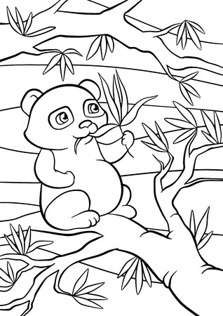 eats: Coloring pages. Little cute pands sits and eats leaves.