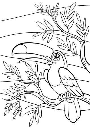 着色のページ。鳥。小さなかわいいオオハシは、ツリー バンチと笑顔で座っています。