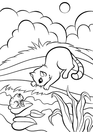 book pages: Coloring pages. Animals. Little cute cat sits on the bank and looks at the frog. Illustration