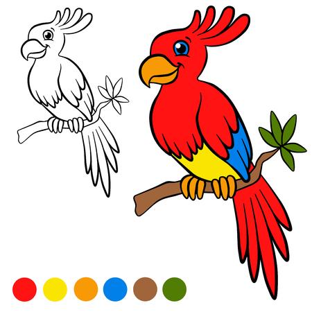 Malvorlagen Vögel Kleiner Netter Papagei Sitzt Auf Dem Ast Und