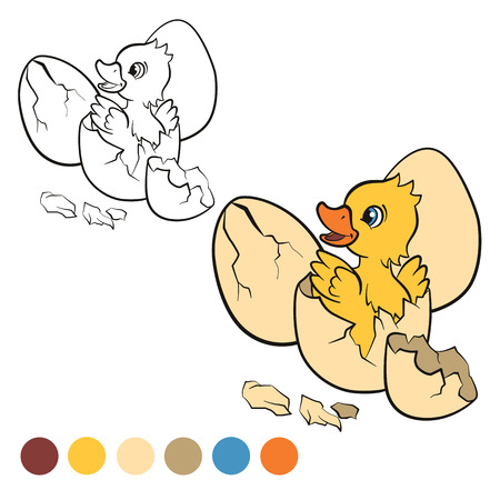 duckling: Coloring page. Color me: duck.  Little cute duckling hatched from the egg. It`s smiling and happy. Illustration