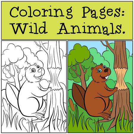 dibujos para colorear: Coloring Pages: Wild Animals. Little cute beaver stands near the tree.