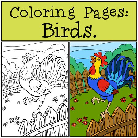 cries: Coloring Pages: Birds. Beautiful rooster stands on the fence and cries.