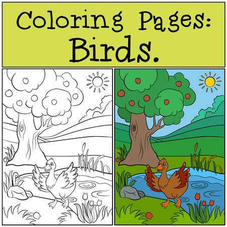 coloring pages: Coloring Pages: Birds. Little cute duck runs from the pond. Illustration