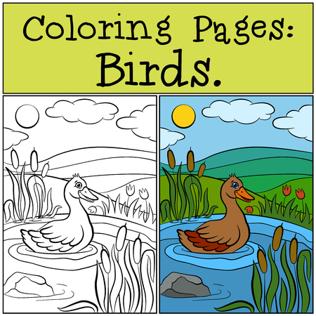 coloring pages: Coloring Pages: Birds. Cute duck swims in the pond. Illustration