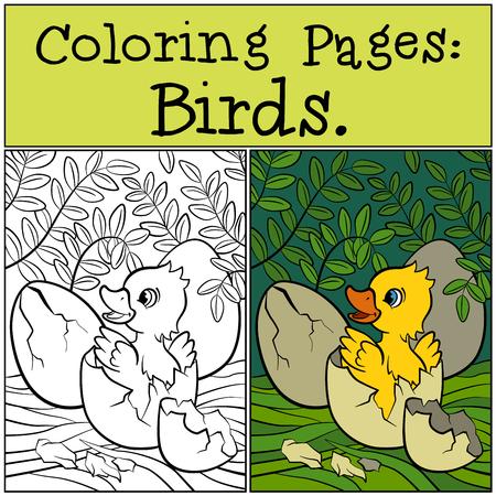 dibujos para pintar: P�ginas para colorear: Aves. Patito lindo en el huevo.